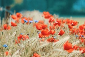 Chelsea Flower Show - Flower